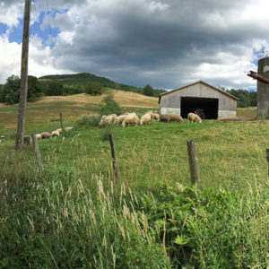 Hallacres Farm