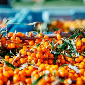 Quatre lieux bucoliques où cueillir vos fruits à Lac-Brome